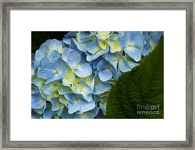 After The Rain Framed Print by Carrie Cranwill