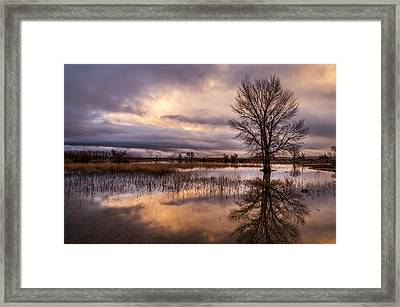 After The Rain Framed Print by Cat Connor
