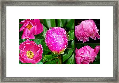 After The Rain Framed Print by Eunice Miller
