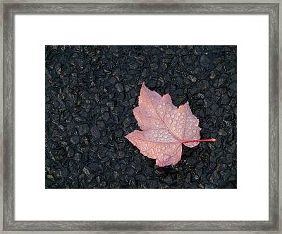 After The Rain Framed Print by Evelyn Tambour