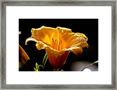 After The Rain Flower 1 Framed Print by Mark Russell