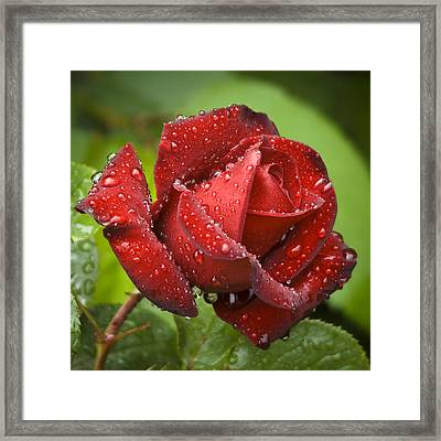 After The Rain Framed Print by Frank Tschakert