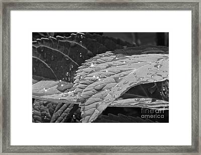 Framed Print featuring the photograph After The Rain by Jay Nodianos