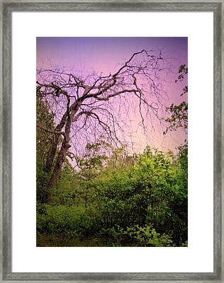 Framed Print featuring the photograph After The Rain by Jim Whalen