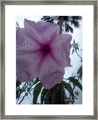 After The Rain Framed Print by K Simmons Luna