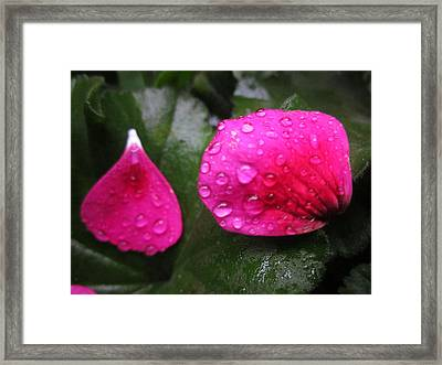 Beauty Drops Framed Print