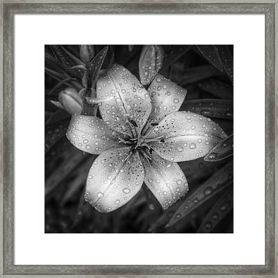 After The Rain Framed Print