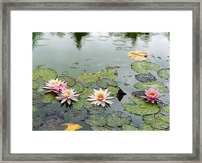 After The Rain Sun. Framed Print