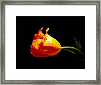 After The Rain Framed Print by Susan Duda