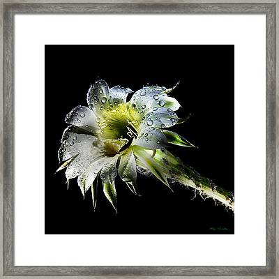 After The Rain Framed Print by Van Allen Photography