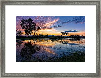After The Rains Framed Print by Mary Amerman