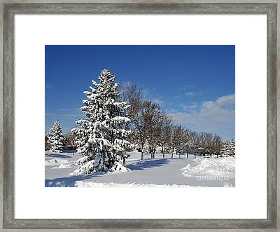 After The Snow 2 Framed Print by Graham Taylor
