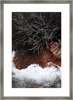 After The Thaw Framed Print by The Forests Edge Photography - Diane Sandoval