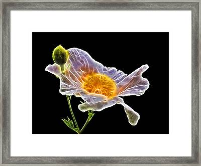 Afterglow Framed Print by Gill Billington