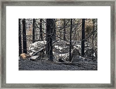 Aftermath Framed Print