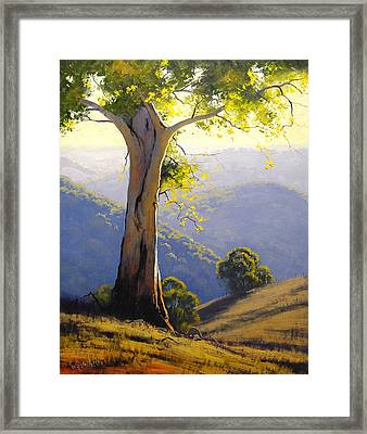 Afternnon Light  Framed Print