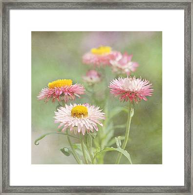 Afternoon Delight Framed Print by Kim Hojnacki