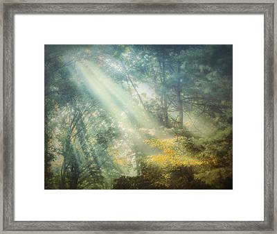 Afternoon Delight Framed Print by William Schmid