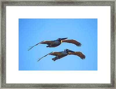 Afternoon Flight. Framed Print