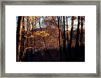 Afternoon Foliage Framed Print by Brian Lucia