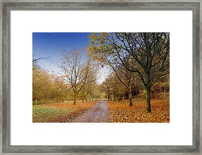 Afternoon In Autumn  Framed Print