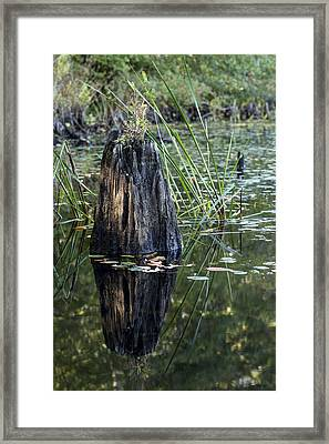 Afternoon Light Framed Print by Andrew Pacheco