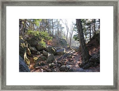 Afternoon Light Framed Print by Ann Pye