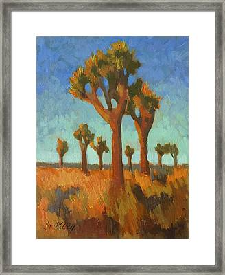 Afternoon Light At Joshua Tree Framed Print