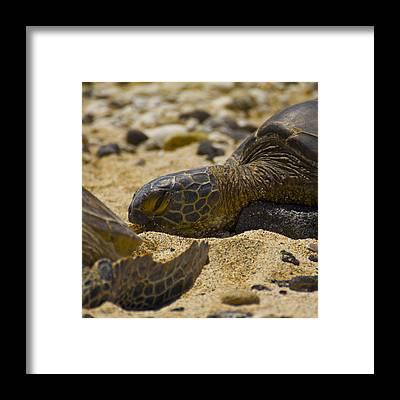 Reptiles Framed Prints