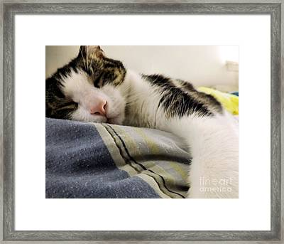 Framed Print featuring the photograph Afternoon Nap by Robyn King