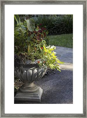 Afternoon Shadow Framed Print by Teresa Mucha