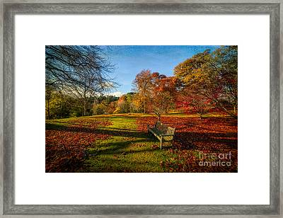 Afternoon Shadows Framed Print