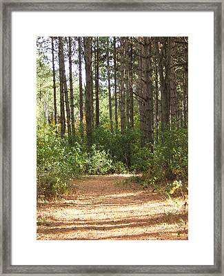 Afternoon Shadows Framed Print by Margaret McDermott