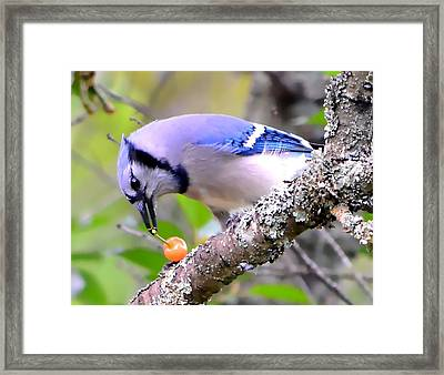 Afternoon Snack Framed Print by Deena Stoddard