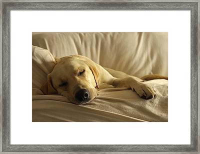 Afternoon Snooze Framed Print by Saya Studios