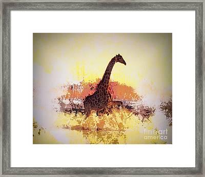 Afternoon Splash Framed Print