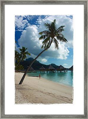Afternoon Stroll Framed Print by Nick Difi