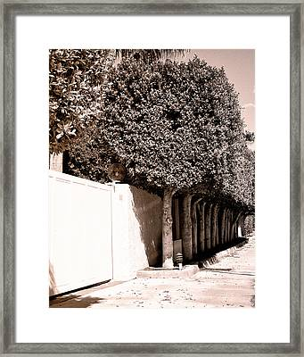 Afternoon Sun Bw Palm Springs Framed Print by William Dey