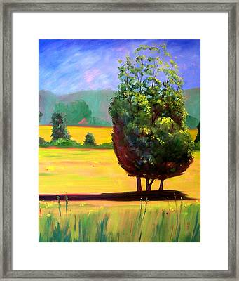 Afternoon Sun Framed Print by Nancy Merkle