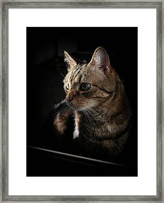Afternoon Sunlight On The Face Framed Print
