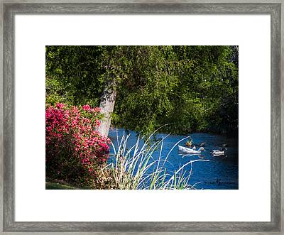 Afternoon Swim Framed Print