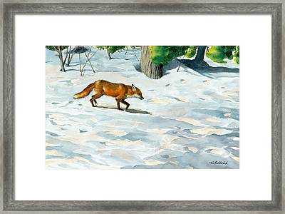 Afternoon Visitor Framed Print by Tom Hedderich