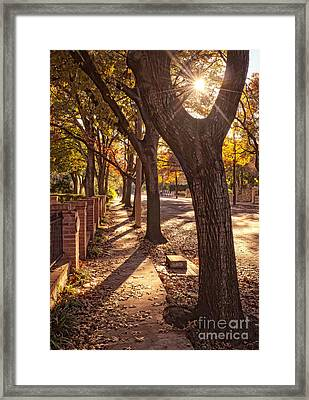 Afternoon Walk Framed Print