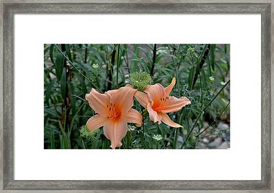 Again And Again Framed Print by Larry Jones