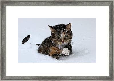 Framed Print featuring the photograph Against All Odds by Silke Brubaker