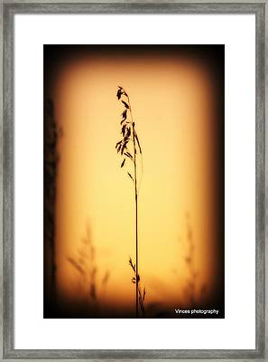 Against The Grain  Framed Print