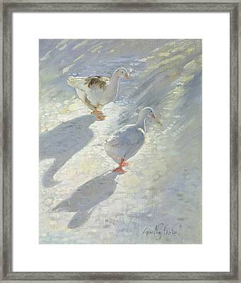 Against The Slope  Framed Print by Timothy Easton