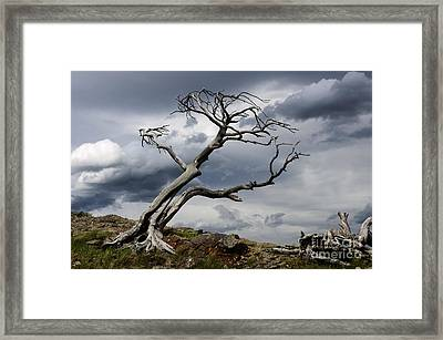 Against The Wind Framed Print by Bob Christopher