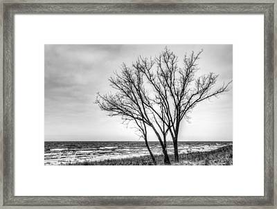Against The Wind Framed Print by William Reek
