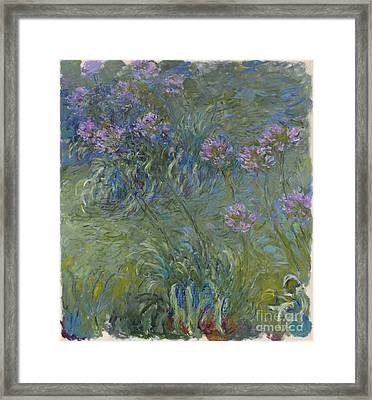 Agapanthus Flowers 1914-17 Framed Print by Claude Monet